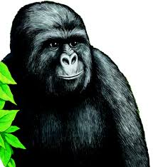 Gorilla Munch Meme - our jimmies have changed misc feels bodybuilding com forums