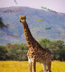 Drunk Giraffe Meme - wow doge that giraffe d by vanjuschka on deviantart