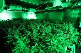 Grow Room Lights Supplemental Lighting Or Side Lighting For Indoor Cannabis Grow