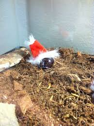 hermit crab wearing a tiny santa hat happy holidays all about