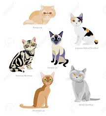 different breeds of cats persian japanese bobtail shorthair