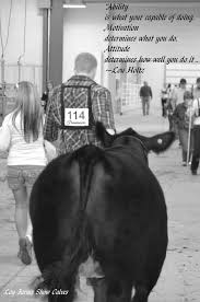 Show Steer Barns Best 25 Showing Cattle Ideas On Pinterest Show Cattle Show