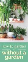 indoor herbs to grow how to garden without a garden u2014 best indoor plants thegoodstuff