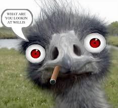 Ostrich Meme - ostrich photobombs 14 pics