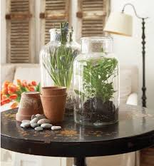 terrariums tiny indoor gardens make a big statement apartment