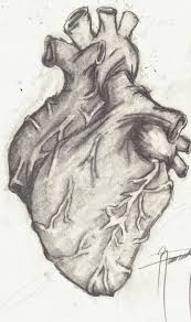 human heart by remedy13 on deviantart