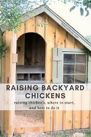 raising backyard chickens freecycle usa