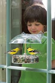 80 best for the birds droll yankees bird feeders images on