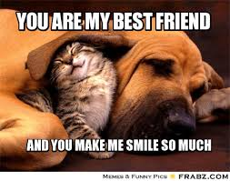Cute Friend Memes - you are my best friend meme generator captionator funny