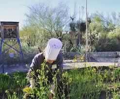 native plants of spain gardens tohono chul tucson az