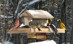 the great backyard bird count group habitat network