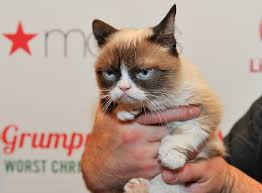 Grumpy Kitty Meme - 10 of the funniest grumpy cat memes