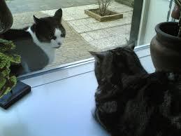 cat communication wikipedia