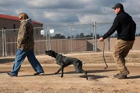belgian malinois vest bomb sniffing dogs that hunt off leash and the future of k9s new