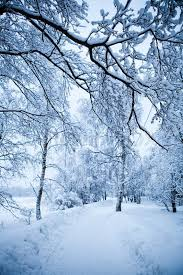 winter trees on cold winter day in finland stock photo