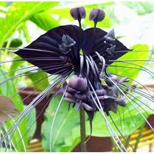 orchid plants for sale 2018 hot sale bag black tiger orchid flowers seeds flower