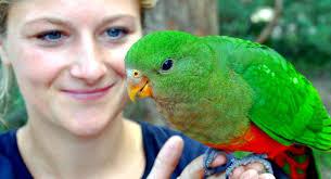 auãÿergewã hnliche hochzeitsgeschenke tierisch gute geschenke für freunde tiere hautnah erleben