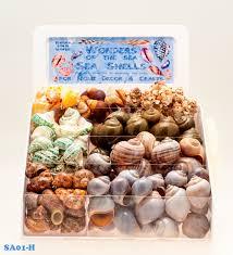 Where To Buy Seashells Seashells Starfish U0026 Ocean Related Giftware