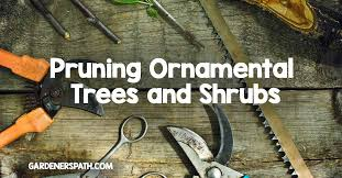 pruning ornamental trees and shrubs gardener s path