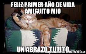imagenes groseras de gatos memes de gato grosero galeria 4 imagenes graciosas
