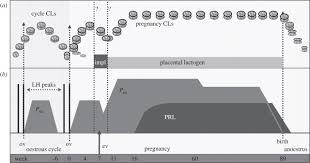 Sheep Gestation Table Elephant Pregnancy Maintenance Proceedings Of The Royal Society