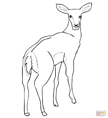 female impala antelope coloring page free printable coloring pages