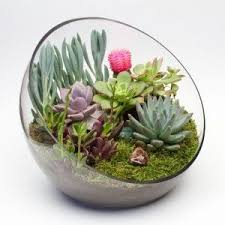 best 25 large glass terrarium ideas on pinterest terrarium