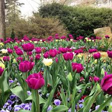 Botanical Gardens In Birmingham Al April Welcomes Plant Sale And Alabama S Running