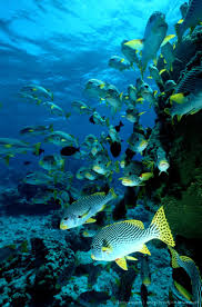 252 best under the sea images on pinterest beautiful fish