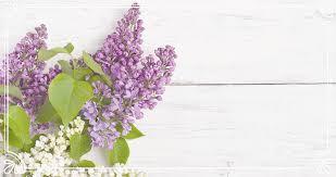 purple lilac lilac inn