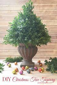 Rosemary Topiary Diy Christmas Tree Topiary