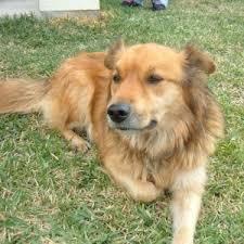 Dog Burial Backyard Pet Cemetery And Crematory Options Angie U0027s List
