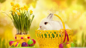 happy easter bunny 50333 easter festival