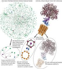 the emergence of protein complexes quaternary structure dynamics