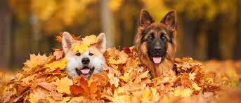 wholesome thanksgiving ingredients for your pets wellness pet food