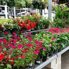 black friday hawaii home depot the home depot 22 photos u0026 28 reviews nurseries u0026 gardening