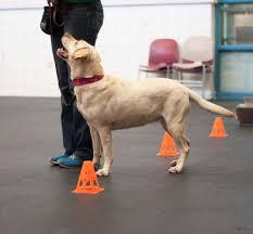 becoming a dog trainer animal humane society