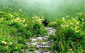 valley of flowers trek uttarakhand by life away from life