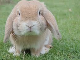 rabbit free pictures pixabay
