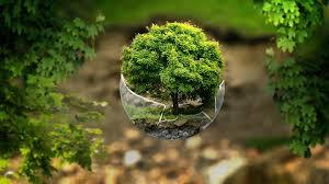 free illustration forest tree mystical nature free image on