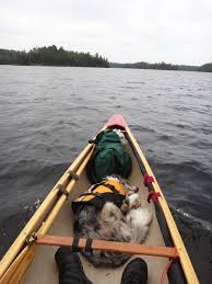 australian shepherd water bwca solo canoe w dog boundary waters private group forum doggie