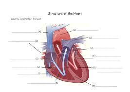 External Heart Anatomy Internal Structure Of The Heart Human Anatomy Charts