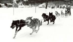 sled dog tales dog sledding in jackson hole u2014 by steve morriss
