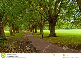 pathway through trees in park stock image image 16675213