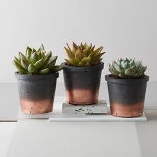 copper flower pots u2013 greenfain