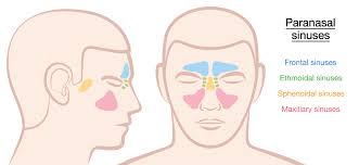 can sinus infection cause dizziness light headed sphenoid sinusitis one of the most dangerous sinus infection