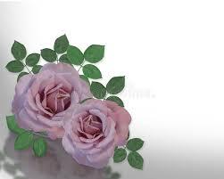 Lavender Roses 2 Lavender Roses Corner Design Stock Photo Image 4713260