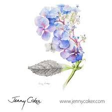 wild blue hydrangea watercolour botanical original artwork