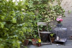 vertical gardening tips add beauty and function to a small yard