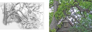 how to draw trees with pencil